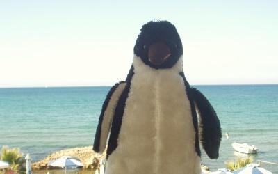 A tribute to Pingu