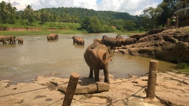 Your Sri Lankan elephant photo