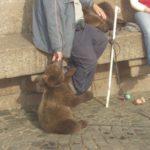 A bear! A baby bear!