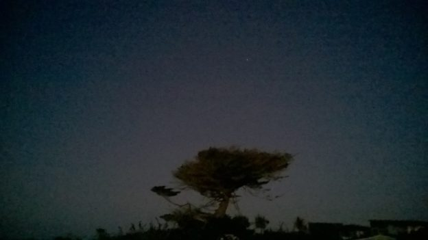 At night I found what is clearly a magical, enchanted tree